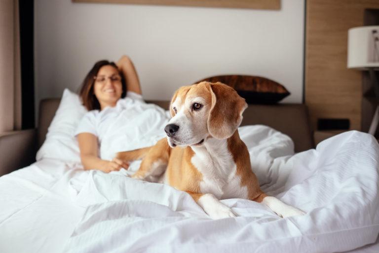 20 % des personnes préfèrent avoir un chien qu'être en couple