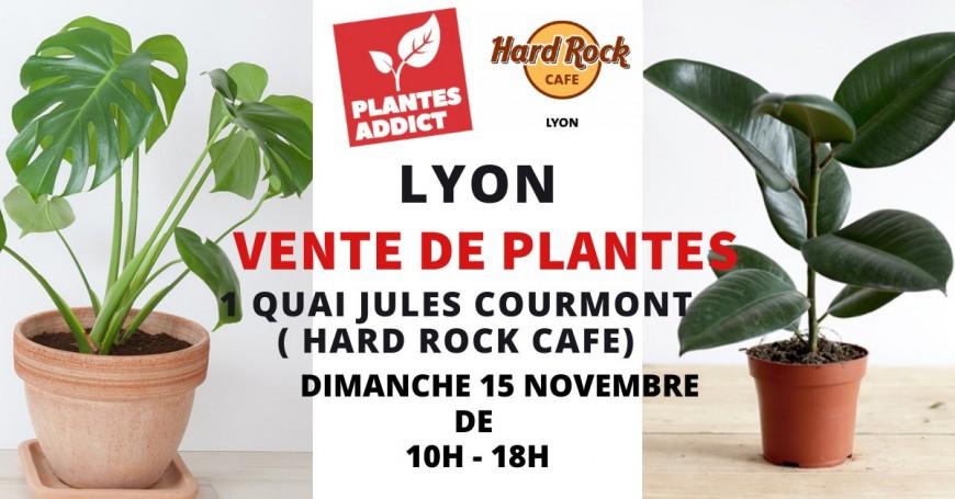 Loisirs : Vente de plantes à partir de 1€ by Plantes Addict