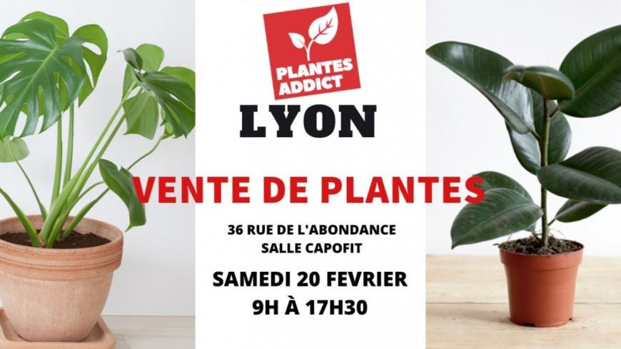 Shopping : Plantes à partir de 1€ by Plantes Addict