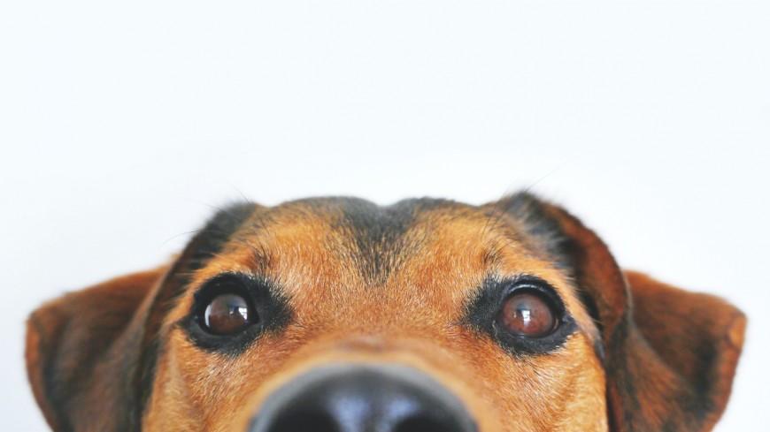 """News : Voici l'application pour adopter un chien abandonné grâce à des """"matchs"""""""
