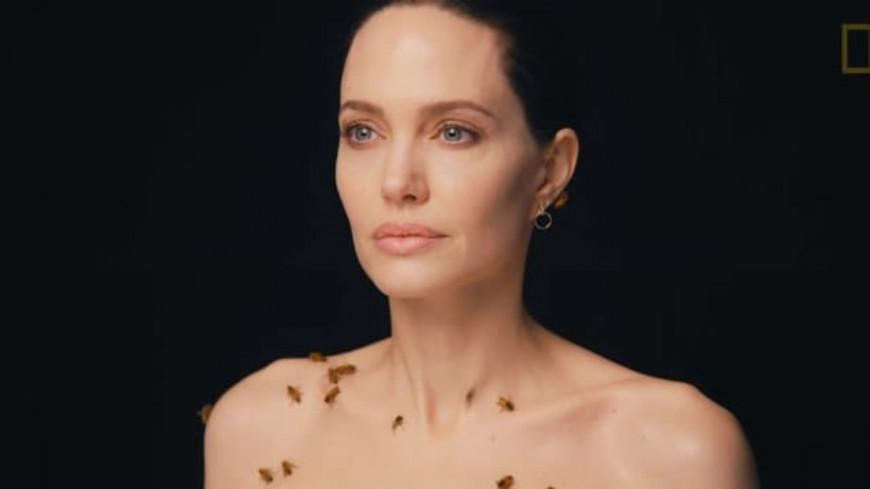 People : Angelina Jolie pose recouverte d'abeilles pour la bonne cause !