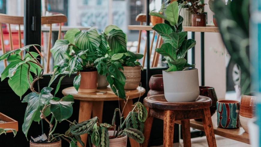 Grande vente de plantes à partir de 1€ à Lyon !