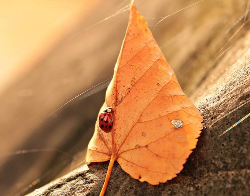 Bien-être : Préparer son corps et sa tête - l'automne - équilibre et mieux être intérieur