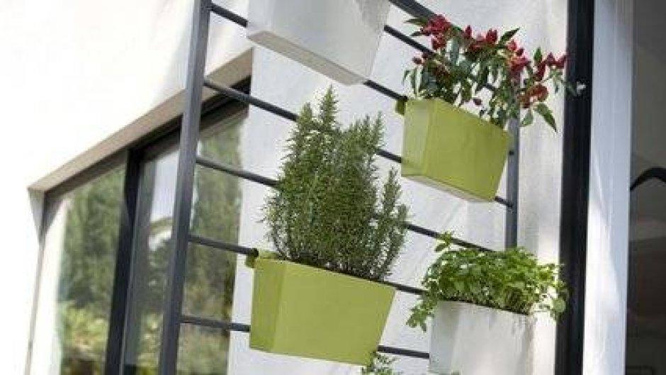 un mur vegetal a petits prix pour mon balcon lyon femmes