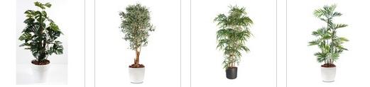 plante verte gamm vert