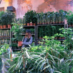 Succulentes, plantes tropicales, cactus… à prix tout doux !