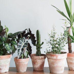 Venez découvrir Le Jardin Ephémère de Maison Bouture !
