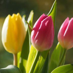 Marché aux plantes et aux fleurs de printemps à Villeurbanne
