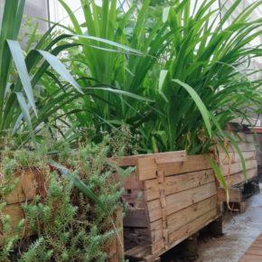 Loisirs : Atelier fabrication d'une jardinière en bois et composition d'une jardinière de balcon