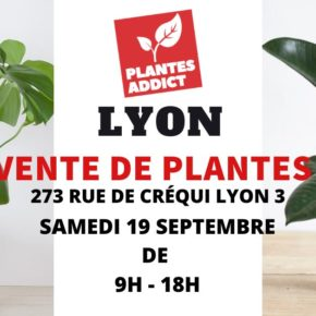 Vente de plantes à partir de 1€ by Plantes Addict
